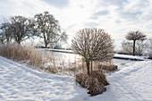 Verschneiter Garten mit zugefrorenem Schwimmteich