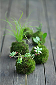 Kokedama: Pflanzen in Mooskugeln auf dem Gartentisch