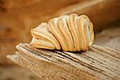 Sardisches Brot in Wellenform