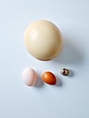 Various eggs from ostrich, duck, chicken, quail