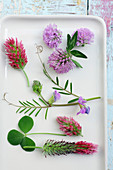 Red clover, crimson clover, red feather clover and common vetch flowers