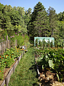 Beds of vegetables and summer flowers in organic garden with greenhouse surrounded by woodland