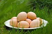 Plate of-eggs-in fresh-green grass outside