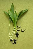 Wild garlic leaves wakame seaweed and barley powder background