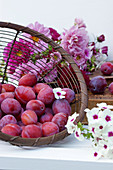 Still life with fresh plums and summer flowers
