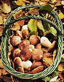Porcini mushrooms in a basket being gathered in the forest