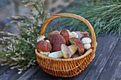 Porcini mushrooms in basket