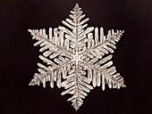 Snowflake, photographed by Wilson Bentley