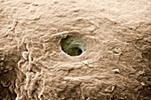 Sweat pore on the skin of a human finger