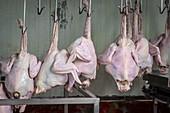Turkey carcasses