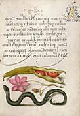 Illuminated calligraphic manuscript, 16th century