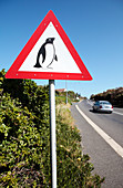 Road sign warning of penguins, South Africa