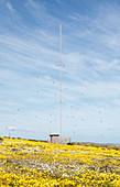 Radio mast, South Africa