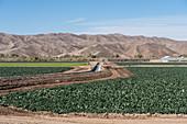 Canal irrigating a leaf lettuce farm, Arizona, USA