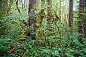 Great Bear Rainforest, British Columbia, Canada