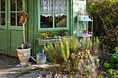 Rosmarin und Lenzrose im Beet am Gartenhaus