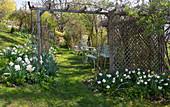 Hanggarten mit weißen Narzissen, Pergola und Sitzgruppe