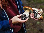 Hands holding wild boletus mushrooms