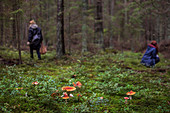 Mushrooms in forest, people in background