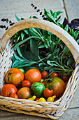 Rustic basket of fresh picked garden tomatoes and herbs