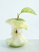 A completely eaten apple with style and leaf