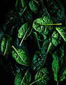 Organic Baby Spinach Leaves