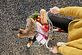 Picnic basket on woman bike with champagne bottle, bread, apple, carrots, pastries, bag, glass and a little cat