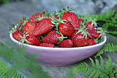Strawberries in oval pink bowl with fern leaves on grey wood