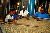 Workers inspecting the quality of coffee