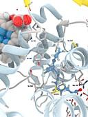 Cyclooxygenase-1 complexed with EPA, molecular model