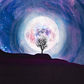Tree silhouetted against the Moon, illustration