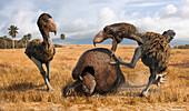 Phorusrhacos prehistoric birds attacking prey, illustration