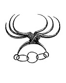 Spanish spider torture device, 19th century illustration