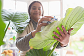 Woman cleaning plant leaf with towel