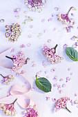 Hortensienblüten, Blätter und Schleifenband