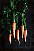 Frische Karotten mit Grün auf dunklem Holzuntergrund