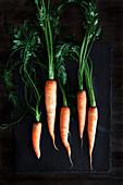 Karotten mit Grün auf dunklem Untergrund