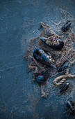 Mussels on a dark blue background