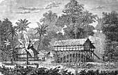 Native dwelling house, Tahiti, 19th century illustration