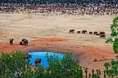 Herd of elephants, Tsavo National Park, Kenya