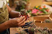 Woman holding tiny succulent plant in a shop