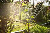 Sprinkler watering plants in sunny lush idyllic garden