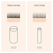 Hair thickness, illustration