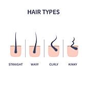 Hair types, illustration