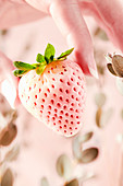 Pineberry being held by a womans hand