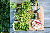 Ingredients for Chimichurri on an outdoor table