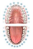 UNS dental notation, illustration