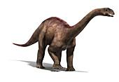 Vulcanodon dinosaur, illustration