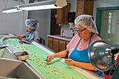 Pistachio factory
