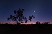 Venus over desert tree, Iran